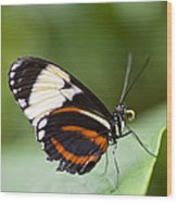 A Side View Of A Butterfly Wood Print by Taylor S. Kennedy