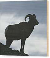 A Silhouetted Bighorn Sheep Standing Wood Print