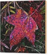 A Single Sweetgum Leaf Wood Print