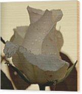 A Single White Rose Wood Print