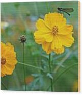 A Small Dragon Fly Sitting On A Yellow Flower Wood Print