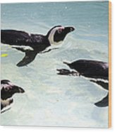 A Small Squadron Of Swimming Penguins Wood Print