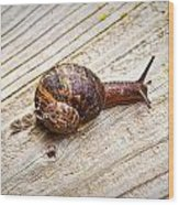 A Snail Sliding Across A Wooden Surface Wood Print by Tom Gowanlock