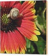 A Snail's Pace Wood Print