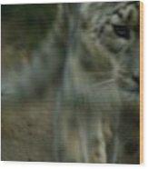 A Snow Leopard Wood Print