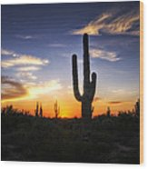 A Sonoran Sunset  Wood Print