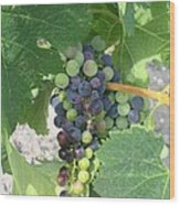 A Spider On The Grapes Wood Print