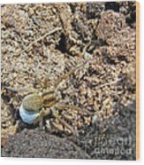 A Spider With The Egg Sack Square Wood Print