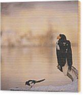 A Stellers Sea Eagle Perched On A Log Wood Print