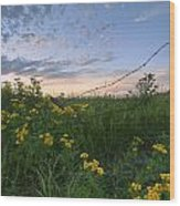 A Summer Evening Sky With Yellow Tansy Wood Print