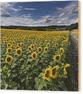 A Sunny Sunflower Day Wood Print