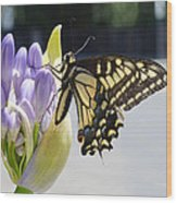 A Swallowtail Butterfly Wood Print