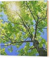A Tall Tree Wood Print