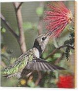 A Taste For Nectar  Wood Print