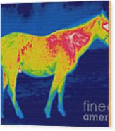 A Thermogram Of A Horse Wood Print