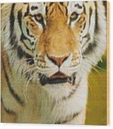 A Tiger Wood Print
