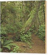 A Trail Cuts Through Ferns And Shrubs Wood Print