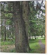 A Tree Divided Wood Print