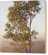 A Tree Outlined By The Rays Of The Setting Sun At Pachmarhi Wood Print
