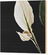A Tribute To Joanna Steichen Wood Print