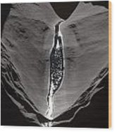 A Trickle Of Water Glistening Wood Print