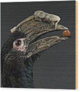 A Trumpeter Hornbill Ceratogymna Wood Print
