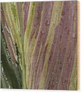 A Varigated Leaf Cast-iron Plant Wood Print