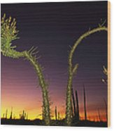 A View At Twilight Of A Boojum Tree Wood Print