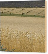 A View Of A Summer Field Of Wheat Wood Print
