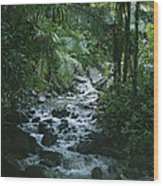 A View Of A Tropical Stream In El Wood Print
