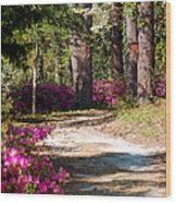 A Walk In The Springtime Woods Wood Print