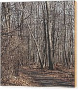 A Walk In The Woods Wood Print by Robert Margetts
