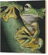 A Wallaces Flying Frog, Rhacophorus Wood Print by Tim Laman