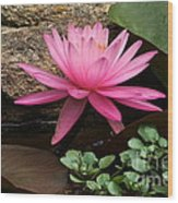 A Waterlily's Grace Wood Print