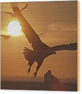 A White-tailed Eagle In Flight Wood Print