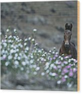 A Wild Horse On A Wildflower Covered Wood Print
