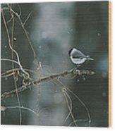 A Willow Tit Parus Montanus Perches Wood Print