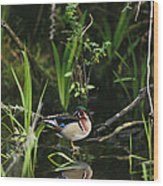A Wood Duck Reflected In Creek Water Wood Print