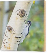 A Woodpeck Behind An Eye Of A Tree Wood Print