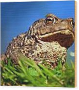 A Worm's Eye View Wood Print