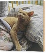A Yawning Cat Wakes From A Nap Wood Print