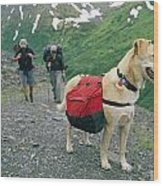 A Yellow Labrador, Wearing A Backpack Wood Print by Rich Reid