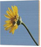 A Yellow Wildflower Wood Print