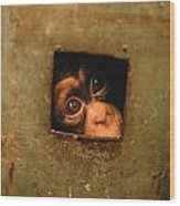 A Young Chimpanzee Held Captive Wood Print