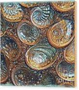 Abalones Wood Print by Judi Bagwell