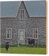 Abandoned Cow House - Barrow Bay Wood Print