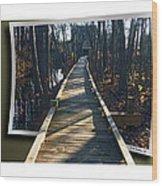 Abbotts Nature Trail Wood Print