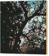 Abstract 224 Wood Print