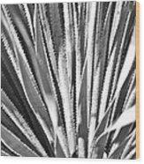Abstract Cactus Wood Print
