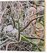 Abstract Caput Medusae Wood Print